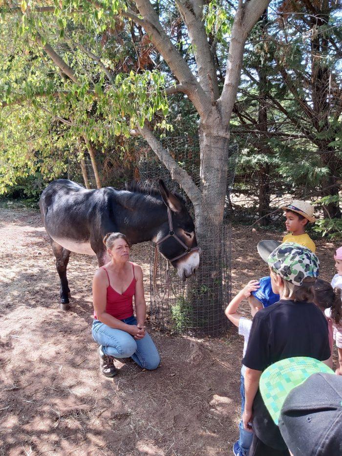 L'après-midi quant à elle a été consacrée à la visite de la ferme pédagogique des 4 saisons pour une enquête policière sur les animaux et une balade à dos d'âne.
