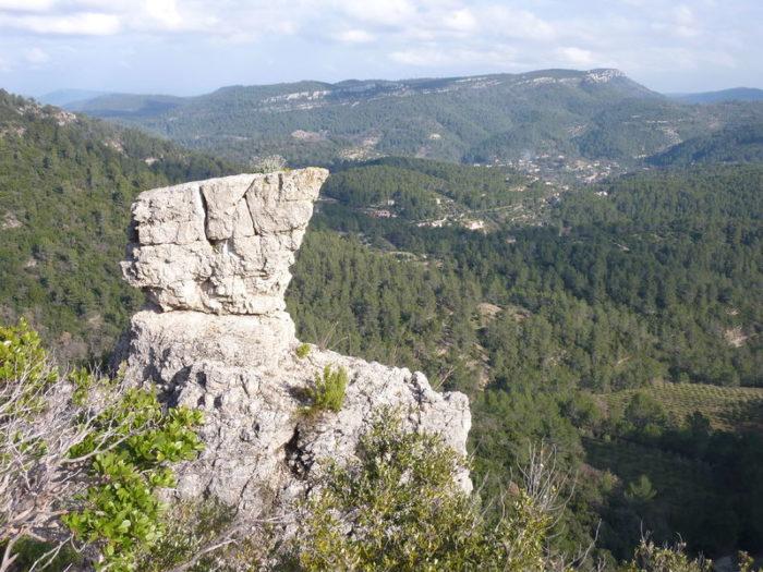 Randonnée : la forêt des Morières