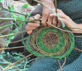 Balades Natures Commentées – La Garde Freinet