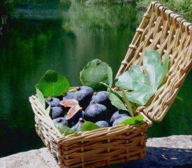 Figues et produits dérivés