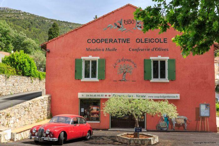 Visite de la cave coopérative oléicole