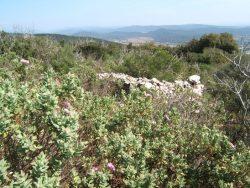 Oppidum du Castellas